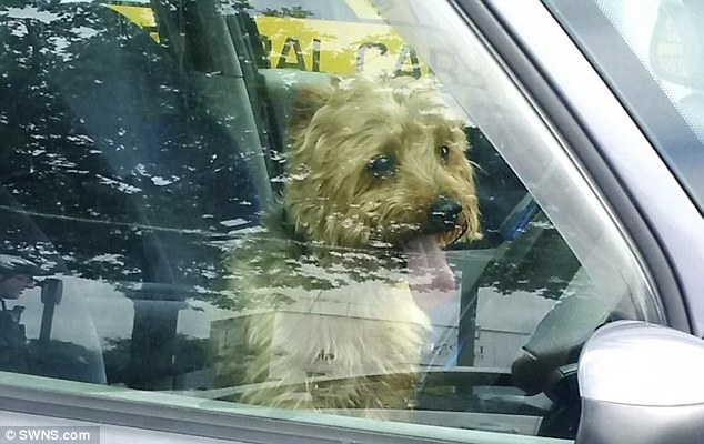 Police Officers saved a 12-year-old Yorkshire Terrier trapped in a car