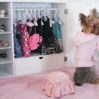Chloe Polka Dot Yorkie and Her Morning Routine