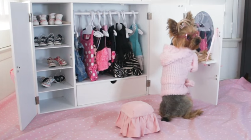 Chloe Polka Dot Yorkie and Her Morning Routine with her Dog Closet