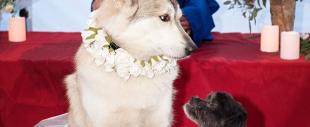 Dog wedding for a cause